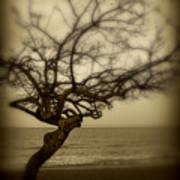 Beach Tree Poster by Perry Webster