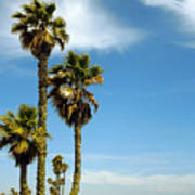 Beach View With Palms And Birds Poster by Ben and Raisa Gertsberg