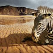 Beach Zebra Poster by Carlos Caetano