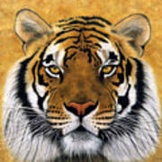 Bengali II Poster by Lawrence Supino