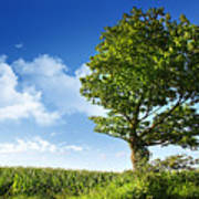 Big Elm Tree Near Corn Field Poster by Sandra Cunningham
