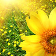 Big Yellow Sunflower  Poster by Sandra Cunningham