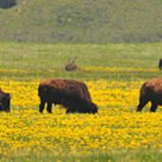 Bison Herd Poster by Alan Lenk