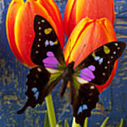 Black And Pink Butterfly Poster by Garry Gay