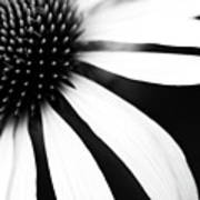 Black And White Flower Maco Poster by Copyright Johan Klovsjö