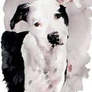 Black And White Pit Poster by Debra Jones