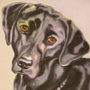 Black Lab Aint No Cure For Love Poster by Susan A Becker