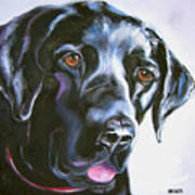 Black Lab No Ordinary Love Poster by Susan A Becker