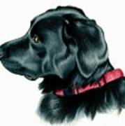 Black Lab With Red Collar Poster by Heather Mitchell
