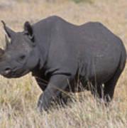 Black Rhino On The Masai Mara Poster by Sandra Bronstein