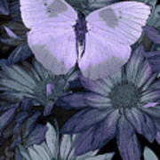 Blue Butterfly Poster by JQ Licensing