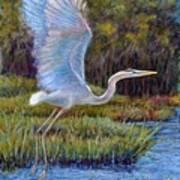 Blue Heron In Flight Poster by Susan Jenkins