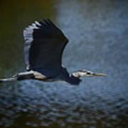 Blue Heron Skies  Poster by Saija  Lehtonen
