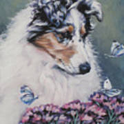 Blue Merle Collie Pup Poster by Lee Ann Shepard