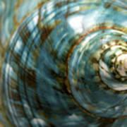 Blue Seashell Poster by Fabrizio Troiani
