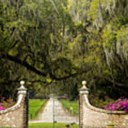 Boone Hall Plantation Poster by Eggers   Photography