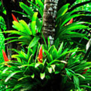 Bromeliads El Yunque National Forest Poster by Thomas R Fletcher