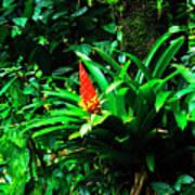 Bromeliads El Yunque  Poster by Thomas R Fletcher