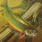 Brook Trout Cover Poster by JQ Licensing