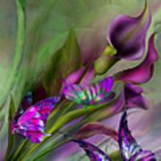 Calla Lilies Poster by Carol Cavalaris