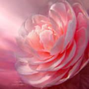 Camellia Poster by Carol Cavalaris