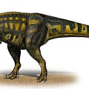 Carcharodontosaurus Iguidensis Poster by Sergey Krasovskiy
