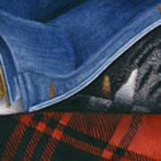 Cat In Denim Jacket Poster by Carol Wilson