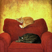 Cats Sleeping On Sofa Poster by Nancy J. Koch, Pittsburgh, PA