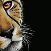 Cheetah Poster by Jurek Zamoyski