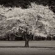 Cherry Blossom Tree - Ocean County Park Poster by Angie Tirado