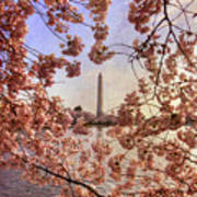 Cherry Blossoms And The Washington Monument Poster by Lois Bryan
