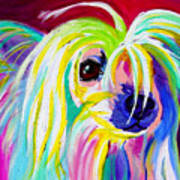 Chinese Crested - Fancy Pants Poster by Alicia VanNoy Call
