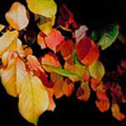 Chokecherry Leaves Poster by Terril Heilman