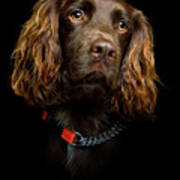 Cocker Spaniel Puppy Poster by Andrew Davies
