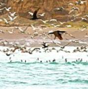 Cormorant Flight In Frenzy Poster by Gus McCrea