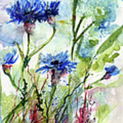 Cornflowers Korn Blumen Watercolor Painting Poster by Ginette Callaway