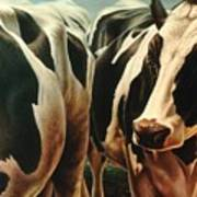 Cows 1 Poster by Hans Droog