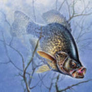 Crappie Cover Tangle Poster by JQ Licensing
