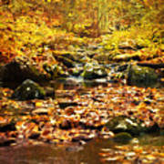 Creek In The Woods Poster by Kathy Jennings