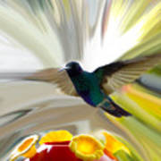 Cuenca Hummingbird Series 1 Poster by Al Bourassa