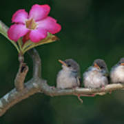 Cute Small Birds Poster by Photowork by Sijanto