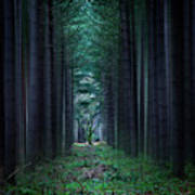Dark Side Of Forest Poster by Svetlana Sewell