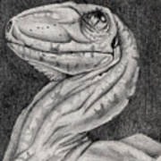 Deino Hatch Sketch Poster by Michael McKenzie