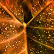 Dew Drops Poster by Susanne Van Hulst