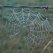 Dew On The Web Poster by Douglas Barnett