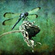 Dragonfly Art Poster by Sari Sauls