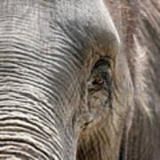 Elephant Eye Poster by Jeannie Burleson