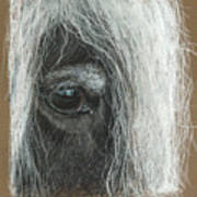 Equine Eye Detail Poster by Terry Kirkland Cook