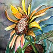 Evening Sun Flower Poster by Mindy Newman