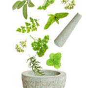 Falling Herbs Poster by Amanda Elwell
